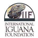 Iguana Foundation Profile of C. Quinquecarinata